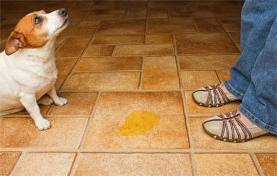 cheiro-de-urina-de-cachorro